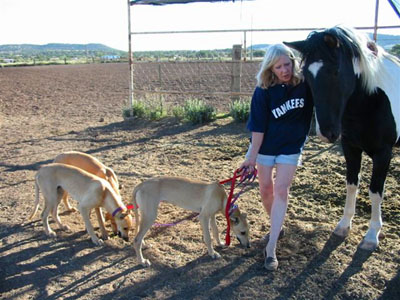 Mimi Smith, blonde, mid-forties, three red 6 month old Greyhound puppy littermates and Chispa, the paint horse.