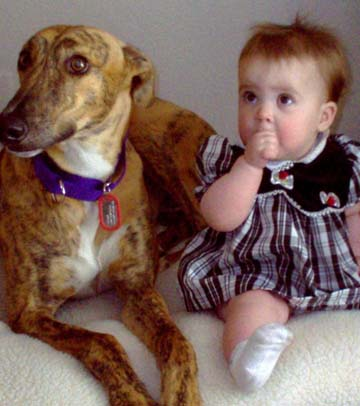 The red brindle Greyhound with a white chest is lying on a bed with a baby in a plaid dress, sucking her thumb.
