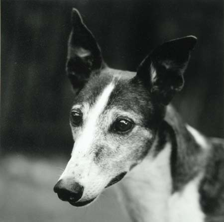 image of Greyhound