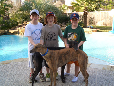 Young Tommy, Shane and Graham Casey with their two Greyhounds, Bowie, brindle, and Roller, black, in front of their pool.