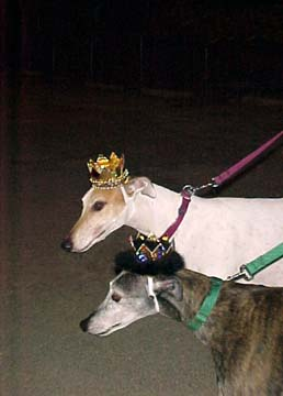 Corey, a large white Greyhound and his smaller grey brindle Greyhound girlfriend, Raine, wearing crowns at a party.