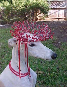 Giselle, fawn and white spotted Greyhound, is wearing an ethereal red wreath on her head, complete with a matching red bead necklace.