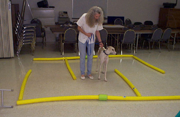 Charlotte Wilson helps her white and fawn spotted Greyhound, Giselle, navigate through a floor Labyrinth / floor maze at TTouch Class.