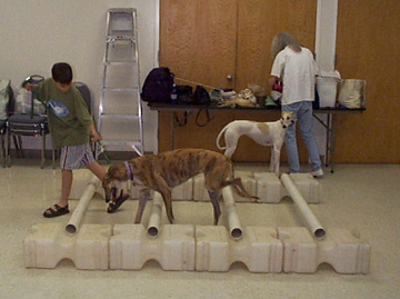Young Austin leads his brindle Greyhound, Victoria, over the poles in TTouch Class.